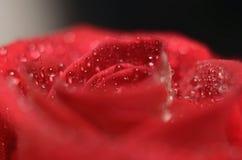 Bourgeon rose de plan rapproché Photographie stock