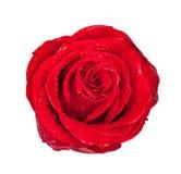 Bourgeon rose de rouge d'isolement sur le blanc Photos libres de droits
