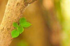 Bourgeonnement de plan rapproché des feuilles d'arbre de jardin Concept de la nature, Ne photographie stock