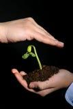 Bourgeonnez la plante disponible photo stock