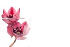 Bourgeons d'orchidée à l'arrière-plan en verre avec l'espace fait sur commande Photographie stock libre de droits
