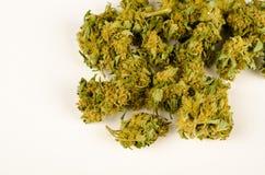 Bourgeons de cannabis image libre de droits