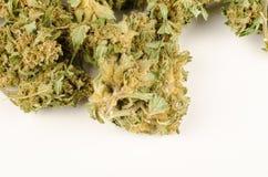 Bourgeons de cannabis photographie stock libre de droits