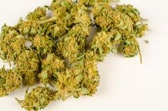 Bourgeons de cannabis photos stock
