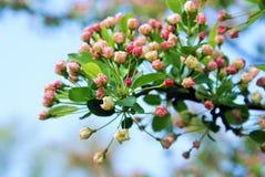 Bourgeons de fleur Photographie stock libre de droits
