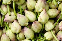 Bourgeons de lotus Photographie stock libre de droits