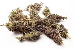Bourgeons de marijuana d'isolement sur un fond blanc THC et valeur et influence de CBD pour la santé photo stock
