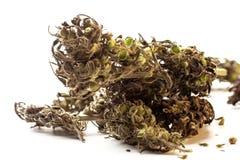 Bourgeons de marijuana d'isolement sur un fond blanc THC et valeur et influence de CBD pour la santé photo libre de droits
