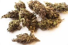Bourgeons de marijuana d'isolement sur un fond blanc THC et valeur et influence de CBD pour la santé photographie stock libre de droits