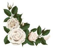 Bourgeons de rose de blanc et feuilles de vert dans le coin illustration stock
