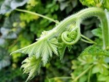 Bourgeons de verdure Image stock