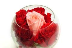 Bourgeons des roses dans un vase en verre rond sur un blanc Images stock