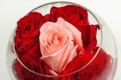 Bourgeons des roses dans un vase en verre rond sur un blanc Photos stock