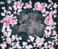 Bourgeons et pétales de roses roses flatlay sur un fond foncé Images libres de droits
