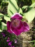 Bourgeons fleurissants Photos stock