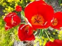 Bourgeons fleurissants Image stock