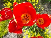 Bourgeons fleurissants Photos libres de droits