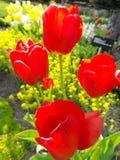 Bourgeons fleurissants Images stock