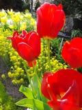 Bourgeons fleurissants Images libres de droits