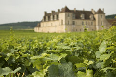 bourgogne伯根地酒葡萄园 免版税库存照片