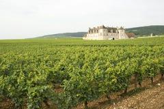 bourgogne伯根地酒葡萄园 库存照片