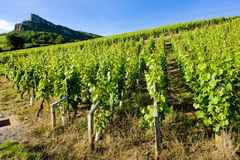 Bourgogne Image stock