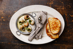 Bourgogne Escargot Snails with garlic herbs butter Royalty Free Stock Images