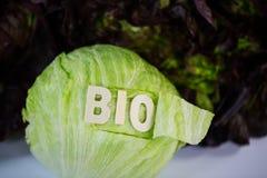 Bourgogne, Novita, salade 'Iceberg', organique, biologique, texte, wr image stock