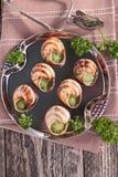 Bourgogne snail, french gastronomy Royalty Free Stock Image