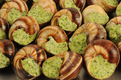 Bourgogne snails Royalty Free Stock Images