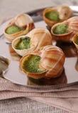 Bourgogne snails Stock Image