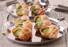 Bourgogne snails Stock Photos