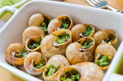 Bourgogne snails. With garlic butter Stock Photo