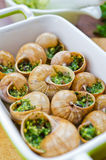 Bourgogne snails Stock Photography