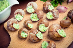 Bourgogne snails Royalty Free Stock Photos