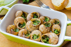 Bourgogne snails Royalty Free Stock Photo