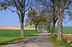 Bourgogne träd-fodrad väg Arkivbilder