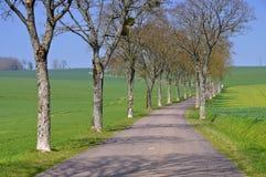 Bourgogne träd-fodrad väg Royaltyfri Bild