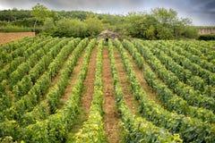Bourgondië, Wijngaard en Cabottes Dichtbij pernand-Vergelesses frankrijk stock foto