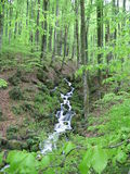 Bourn in mountains forests in Caucasus stock photo