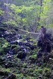 Bourne in Apuseni Mountains, Transylvania Royalty Free Stock Photo