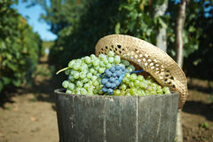 Bout complètement des raisins photographie stock