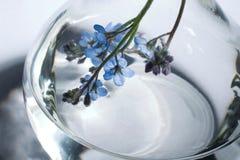 Bouteille avec la fleur et le liquide photo libre de droits