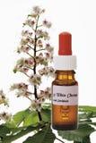 Bouteille avec le remède d'actions de fleur de Bach, châtaigne blanche (hippocastanum d'Aesculus) photo stock