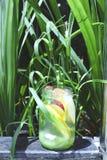 Bouteille d'eau de Detox Photo libre de droits