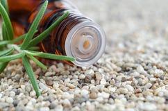 Bouteille d'essence de romarin essentielle Fin d'insertion d'astuce de compte-gouttes de bouteille  photo libre de droits