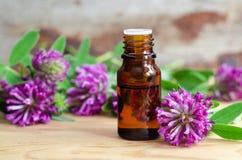 Bouteille d'extrait de trèfle violet (teinture, infusion, huile) image libre de droits