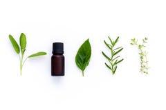Bouteille d'huile essentielle avec la feuille sainte de basilic d'herbe, romarin, oreg Photographie stock