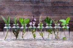Bouteille d'huile essentielle avec la fleur sainte de basilic d'herbes, écoulement de basilic Photos libres de droits