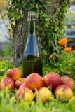 Bouteille de cidre de la Normandie avec des pommes dans l'herbe, Photo libre de droits